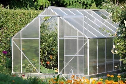 Greenhouse with tomato plants